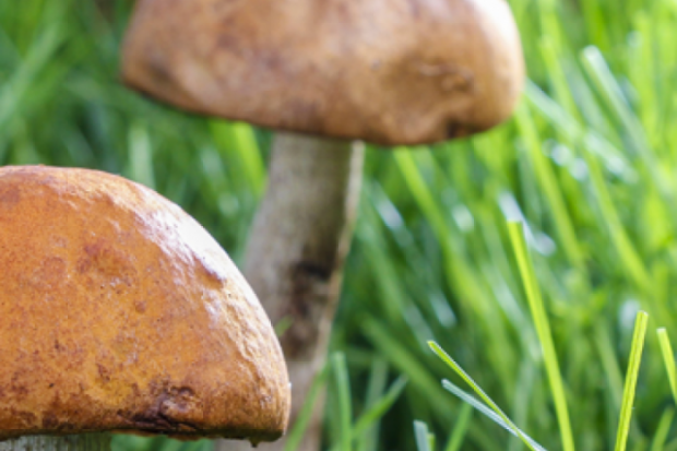 Велика сила грибів