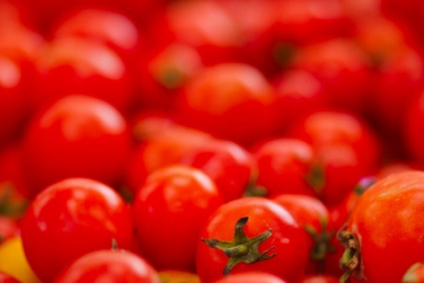 La Tomatina – битва помідорами